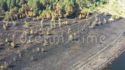 Aerial view scorched earth and tree trunks after a spring fire in forest. Black burnt field. Extraordinary incident. Consequences of a forest fire stock video