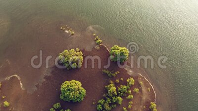 Aerial view on sunset on riverbed and small bird island in Goa. stock video