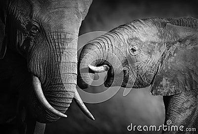 Affection d éléphant (traitement artistique)