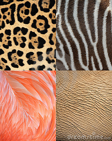 Africa animal pattern texture skin,fur & feathers