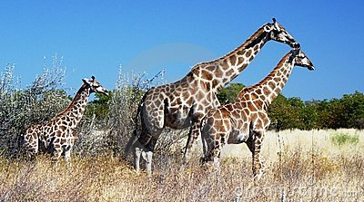 Africa Animal Safari