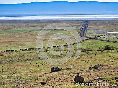 Africa Cattle Drive