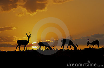 Africa-Impala silhouettes
