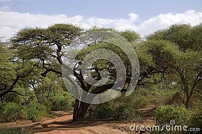Africa landscape 004