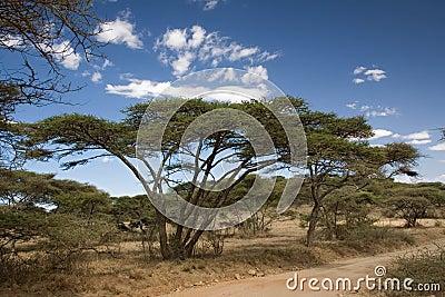 Africa landscape 019 ngorongoro