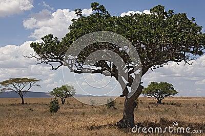 Africa landscape 028 serengeti