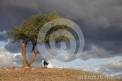 Africa landscape 030 serengeti