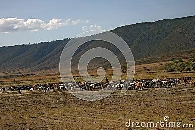 Africa landscape, ngorongoro