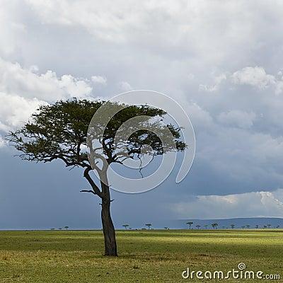 Africa landscape, Serengeti National Park