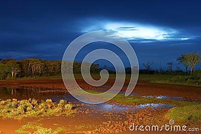 Africa. Night landscape.