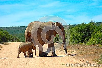 Africa s Wildlife