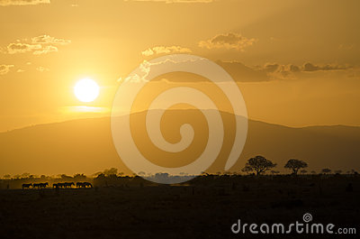 Africa safari sunset