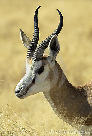 African Animals 8