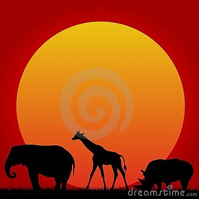 African animals and hot sun