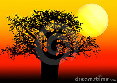 African Baobab tree in sunset