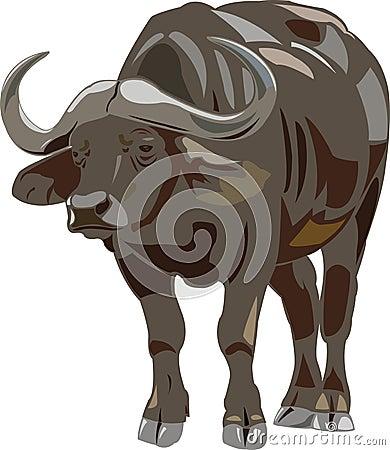 Free African Buffalo Stock Photo - 9575230