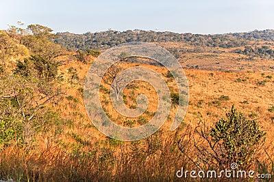African Bush Color Vegetation