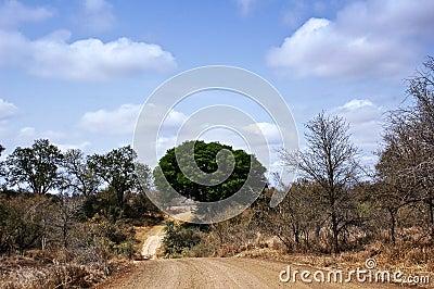 African bush road