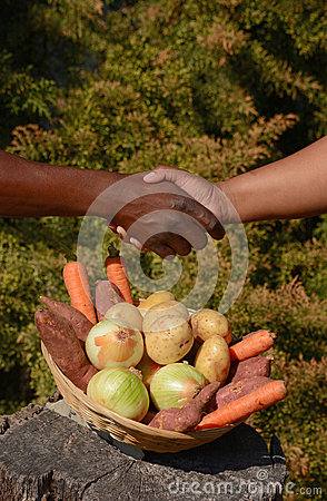 Free African Business Handshake Royalty Free Stock Photo - 44216705