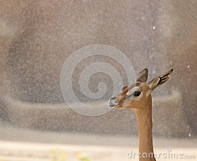African Deer Profile on Sand Background