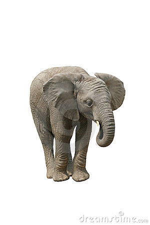 Free African Elephant Royalty Free Stock Photography - 1329447