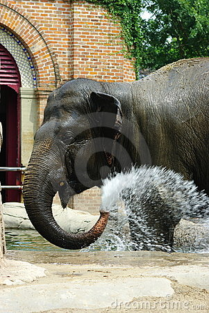 Free African Elephant Royalty Free Stock Image - 5538056