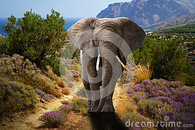 African elephant walking in the bushes