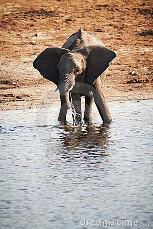 African Elephants Stock Photography - Image: 22498032