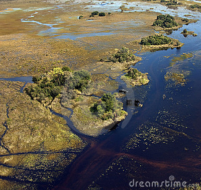 Free African Elephants - Okavango Delta - Botswana Stock Photos - 17826153