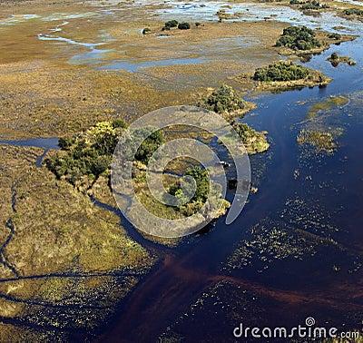 African Elephants - Okavango Delta - Botswana