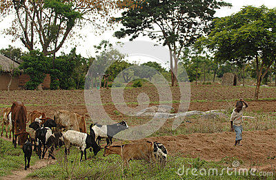 African farm boy Editorial Stock Image