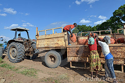 African farmers Editorial Stock Photo