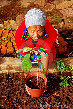 African female planter