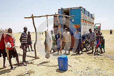 African fish Editorial Stock Photo