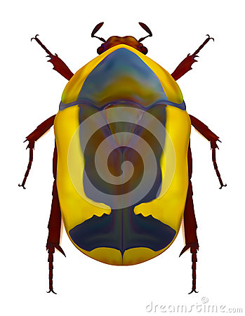 African flower chafer Cartoon Illustration