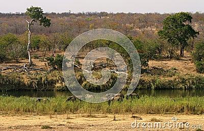 African landscape. Elephants