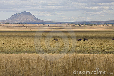 African landscape with volcano and elephants