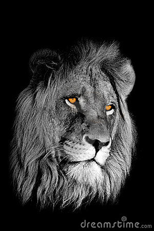 Free African Lion Portrait Stock Photos - 3006743