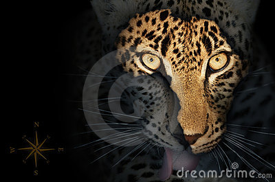 African map on leopard