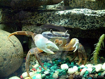 African Moon Crabs Leg Stock Images - Image: 1783614