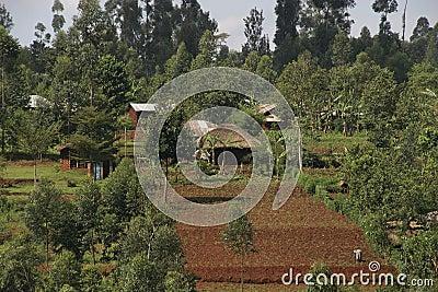 African Rural Landscape