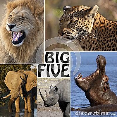 African Safari - The Big Five