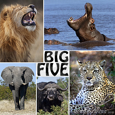 african safari montage the big five botswana royalty free stock image image 22601666. Black Bedroom Furniture Sets. Home Design Ideas