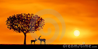 African savanna scenery