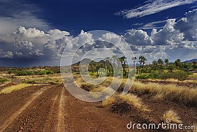 The African savannah