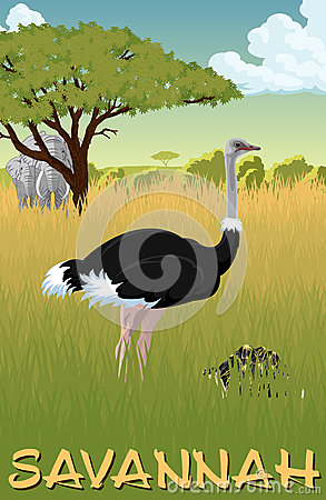 African savannah with ostrich, turtle and elephants - vector Vector Illustration