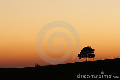 African sunrise with lone tree