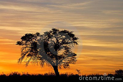 African Sunset With Silhouetted Tree Stock Photos - Image: 14581003