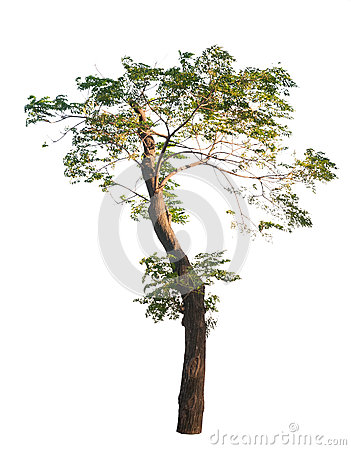 Free African Tree Stock Image - 33252231