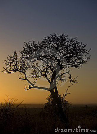 African tree at sunrise